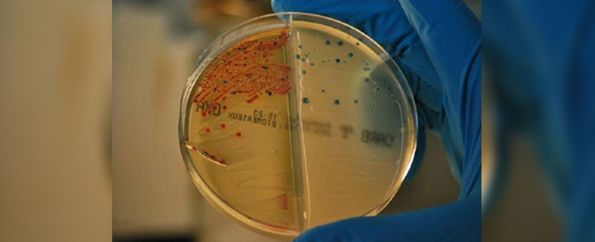 New strategy to curb antibiotic resistance